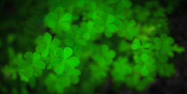 clover - st patricks day background stock photos and pictures