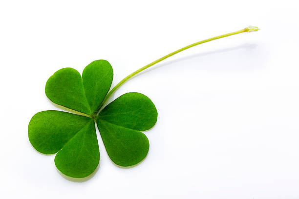 Royalty free shamrock pictures images and stock photos istock clover white background stock photo voltagebd Images