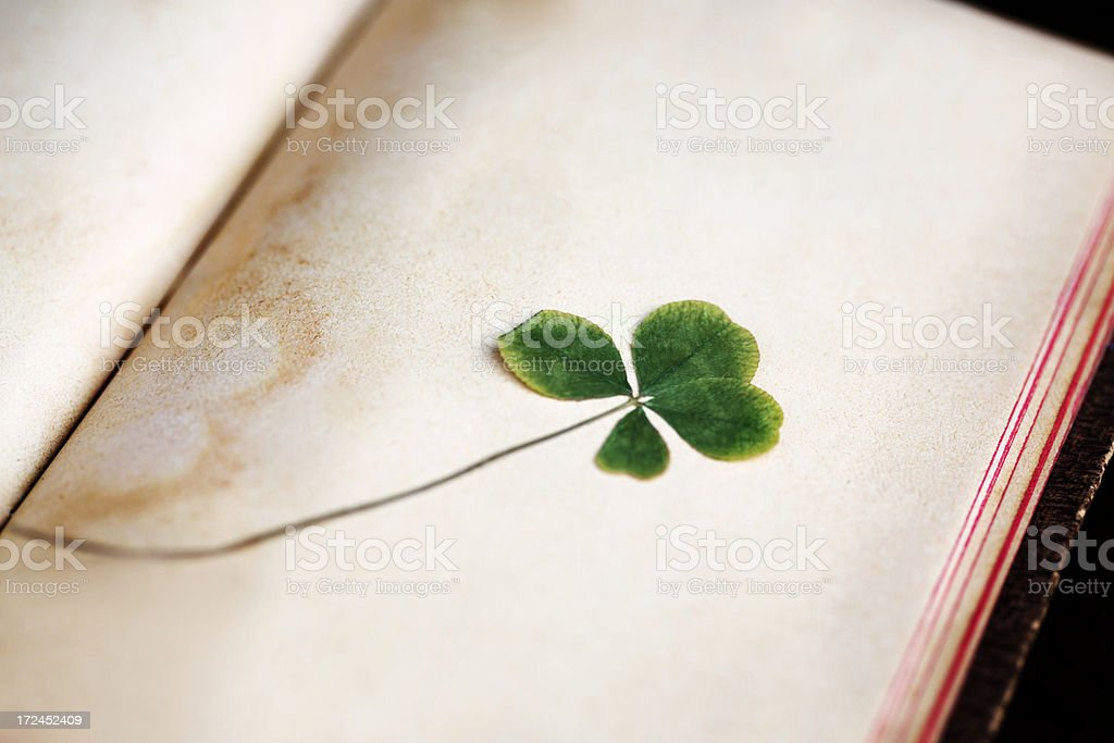 Cloverleaf royalty-free stock photo
