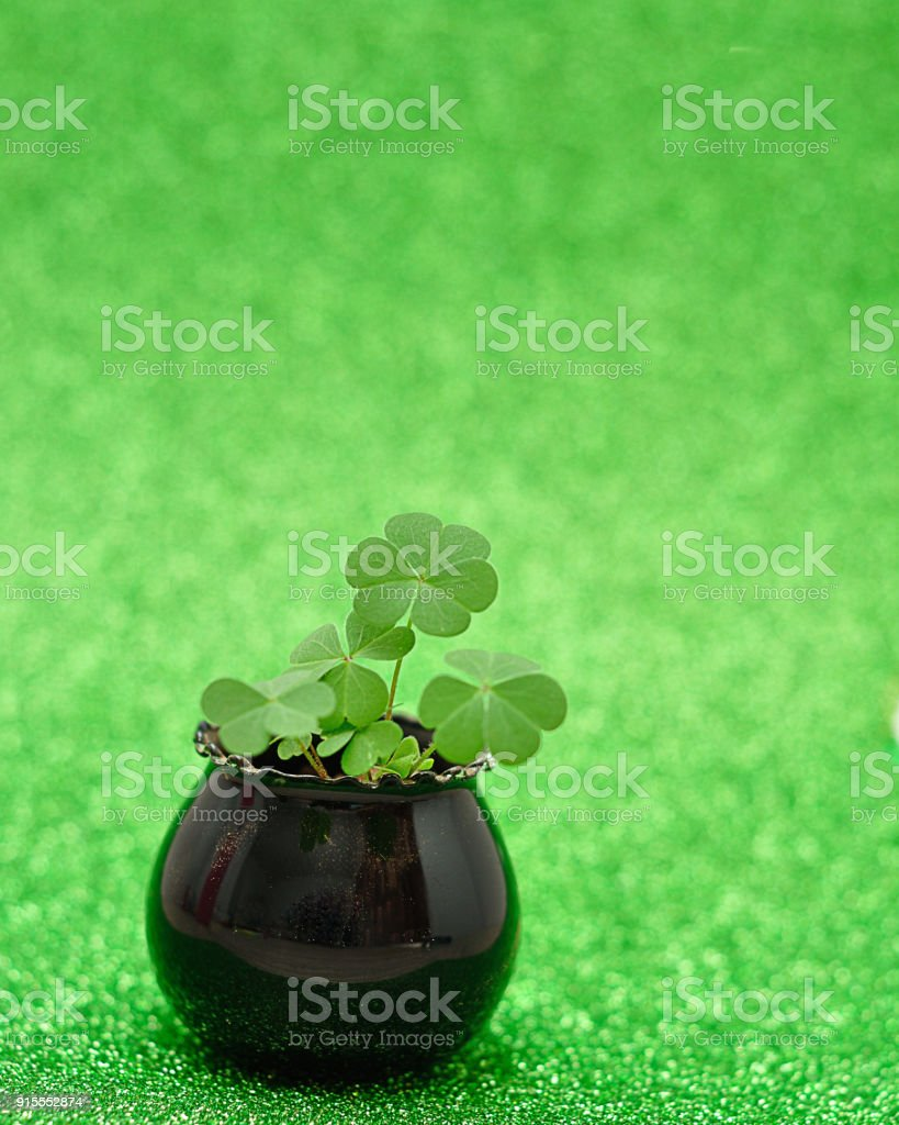 Clovers planted in a small black pot stock photo