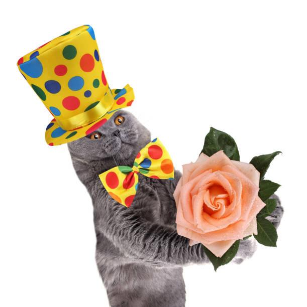 Clown cat and rose picture id920882532?b=1&k=6&m=920882532&s=612x612&w=0&h=4yfx9vbxwpqxsuabgmyclnsq94slgpe jhcwxw3otsu=