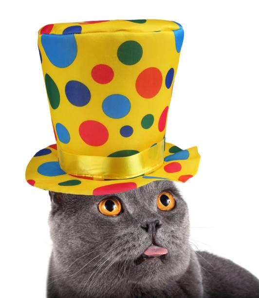 Clown cat is showing tongue picture id920880370?b=1&k=6&m=920880370&s=612x612&w=0&h=a0dj7zmsbi4dlidbeyj8tbmhtcxhfowrayl14ynk3qi=