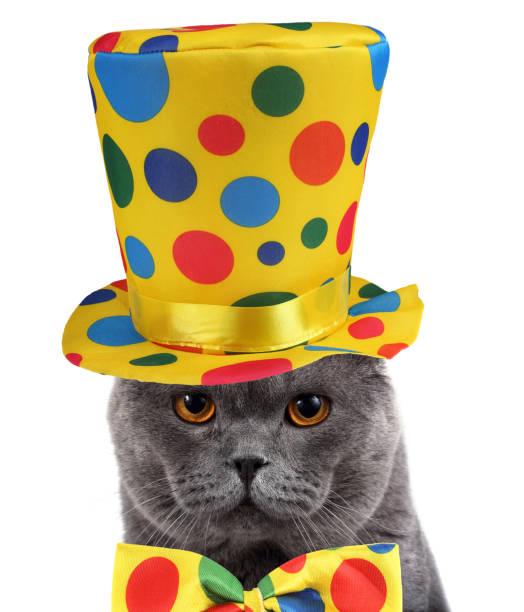 Clown cat portrait picture id920880206?b=1&k=6&m=920880206&s=612x612&w=0&h=m3q7nu3icy2ljh1p e4ao8xp53ljqiupuo3je6kqcnk=