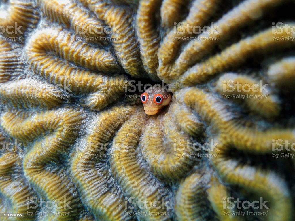 Clown coral fish stock photo