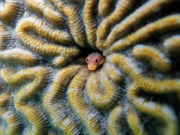 clown coral fish - parzydełkowce zdjęcia i obrazy z banku zdjęć