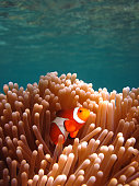 Snorkeling in Southeast Asia  [url=file_closeup.php?id=16099950][img]file_thumbview_approve.php?size=1&id=16099950[/img][/url] [url=file_closeup.php?id=16187713][img]file_thumbview_approve.php?size=1&id=16187713[/img][/url] [url=file_closeup.php?id=15954046][img]file_thumbview_approve.php?size=1&id=15954046[/img][/url] [url=file_closeup.php?id=16676455][img]file_thumbview_approve.php?size=1&id=16676455[/img][/url]  [url=http://www.istockphoto.com/search/lightbox/10068503/?refnum=fototrav#16057b64][img]http://bit.ly/UddrJR[/img][/url]  [url=http://www.istockphoto.com/search/lightbox/7990713/?refnum=fototrav#f6739f3][img]https://dl.dropbox.com/u/61342260/istock%20Lightboxes/Malaysia.jpg[/img][/url]  [url=http://istockpho.to/WMhD0R][img]https://dl.dropbox.com/u/61342260/istock%20Lightboxes/Thailand.jpg[/img][/url]