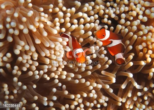 Snorkeling in Southeast Asia