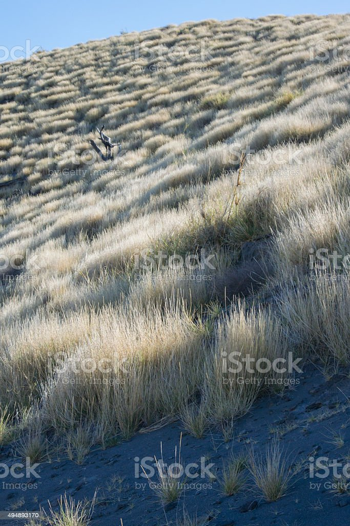 Clumps of Grass on Steep Slope in Tanzania stock photo