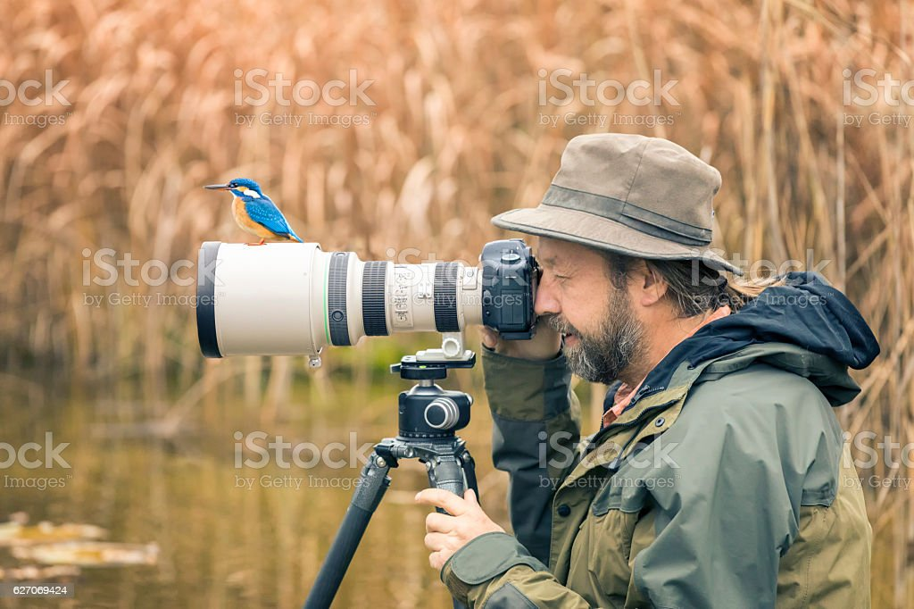 Clumsy nature photographer dont find the kingfisher on the len stock photo
