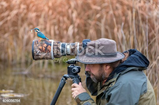 Unfortunate nature photographer can not find the kingfisher on the lens, Alcedo atthis, Autumn