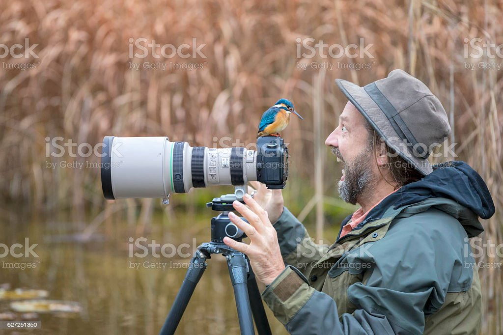 Clumsy nature photographer with kingfisher on the Camera stock photo