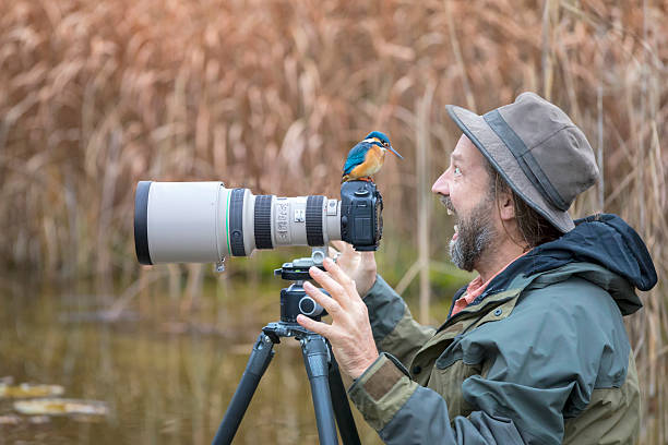 clumsy nature photographer with kingfisher on the camera - ijsvogels stockfoto's en -beelden