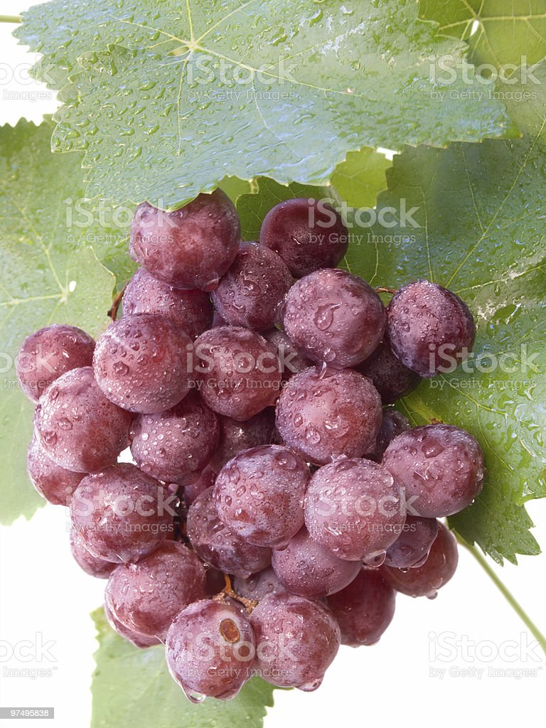 Cluster grapes with drops of water royalty-free stock photo