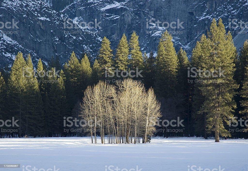 Conjunto de árboles expuesto de invierno en Yosemite Valley - foto de stock