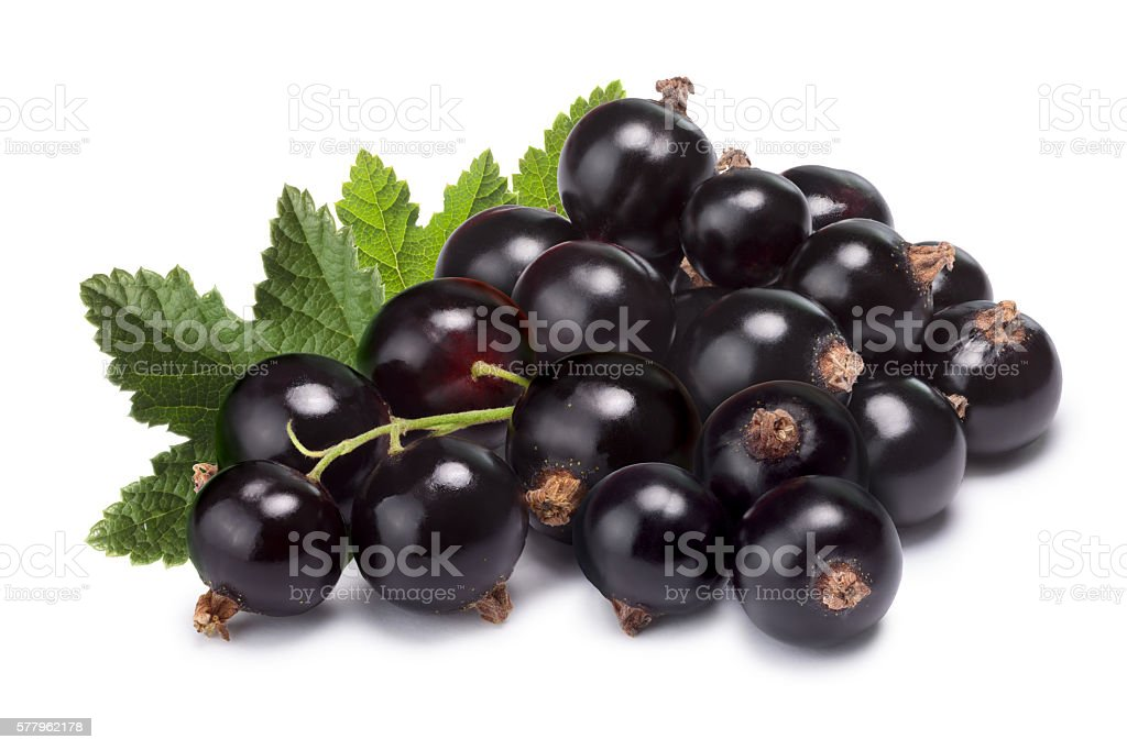 Cluster (bunch) of blackcurrant stock photo