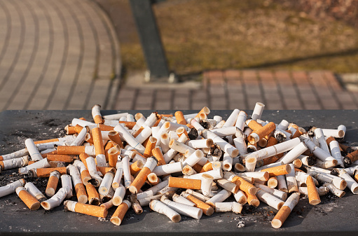 Cluster of cigarette butts gathered from smokers