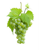 isolated grape cluster