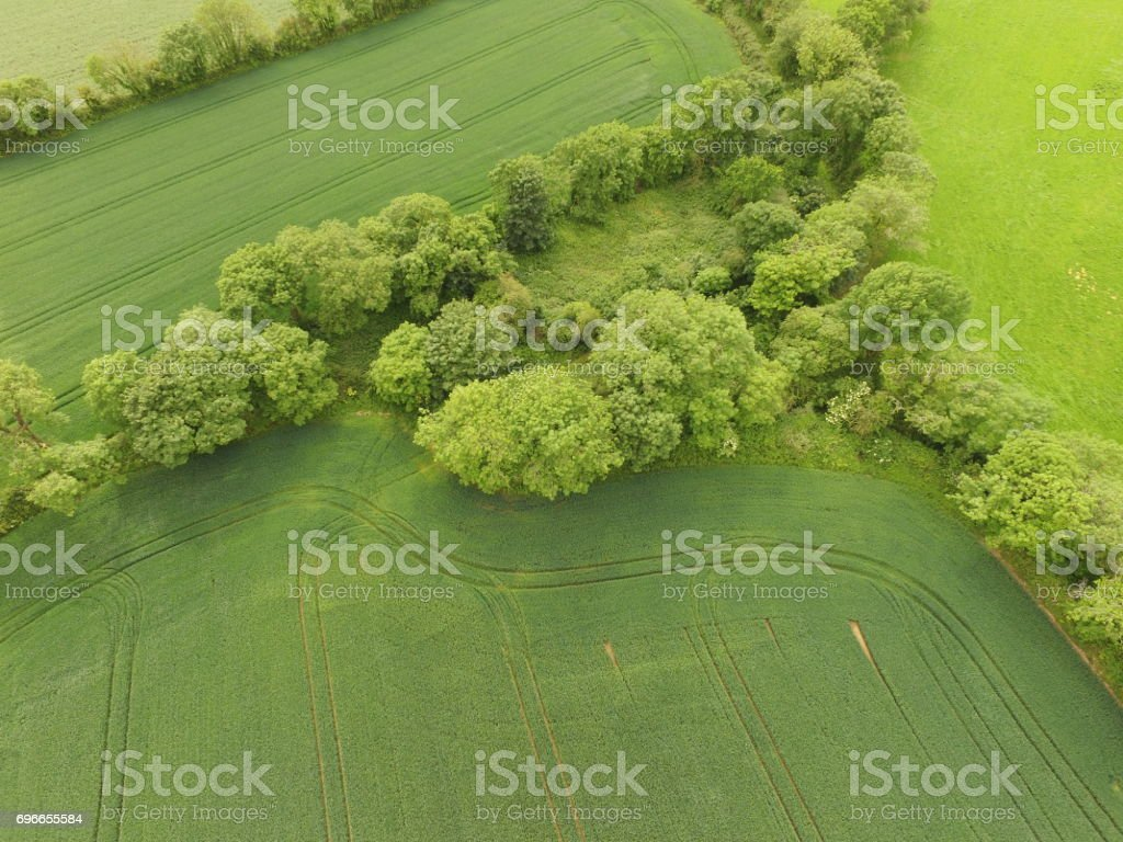 A cluster of green trees from above stock photo