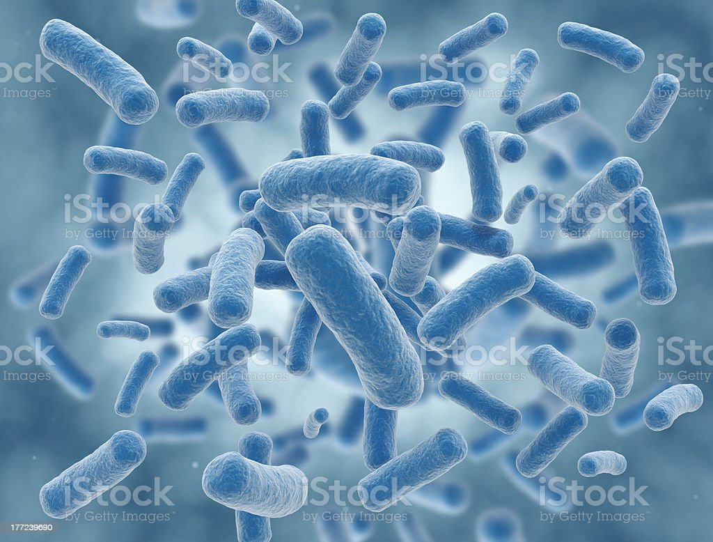 A cluster of rid shaped bacteria royalty-free stock photo