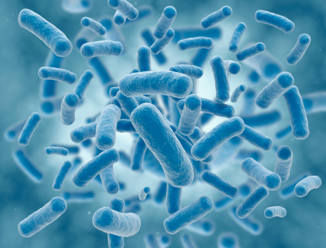 A Cluster Of Rid Shaped Bacteria Stock Photo - Download Image Now