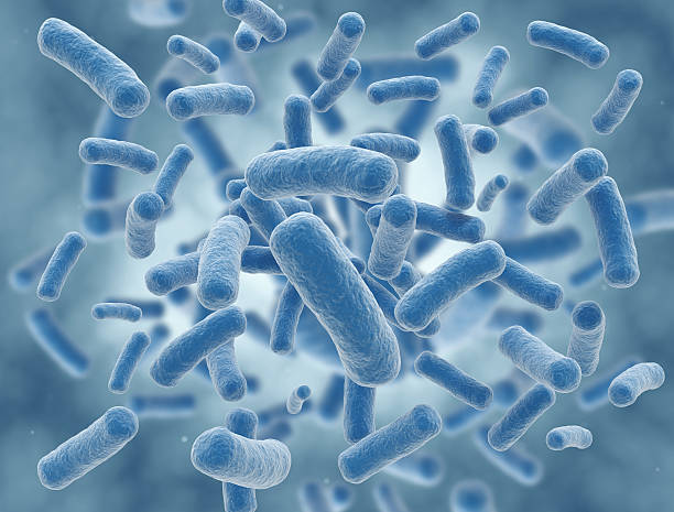 A cluster of rid shaped bacteria stock photo
