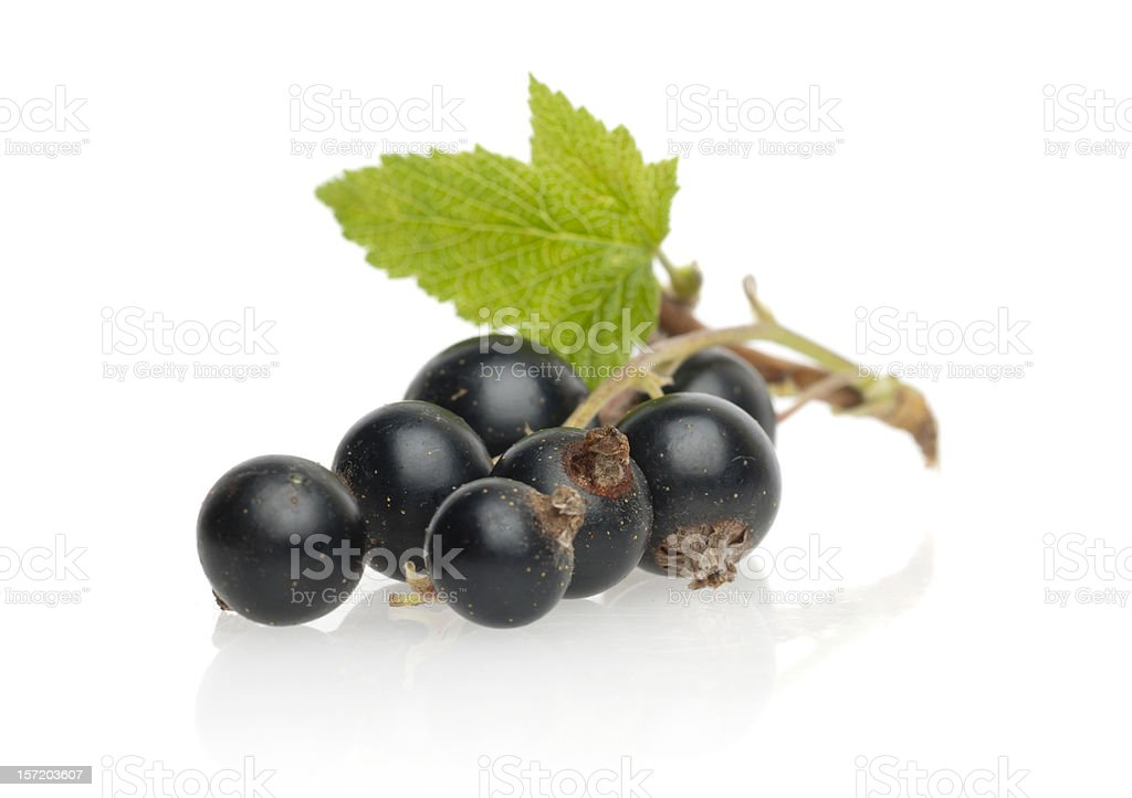 A cluster of ripe black currants stock photo