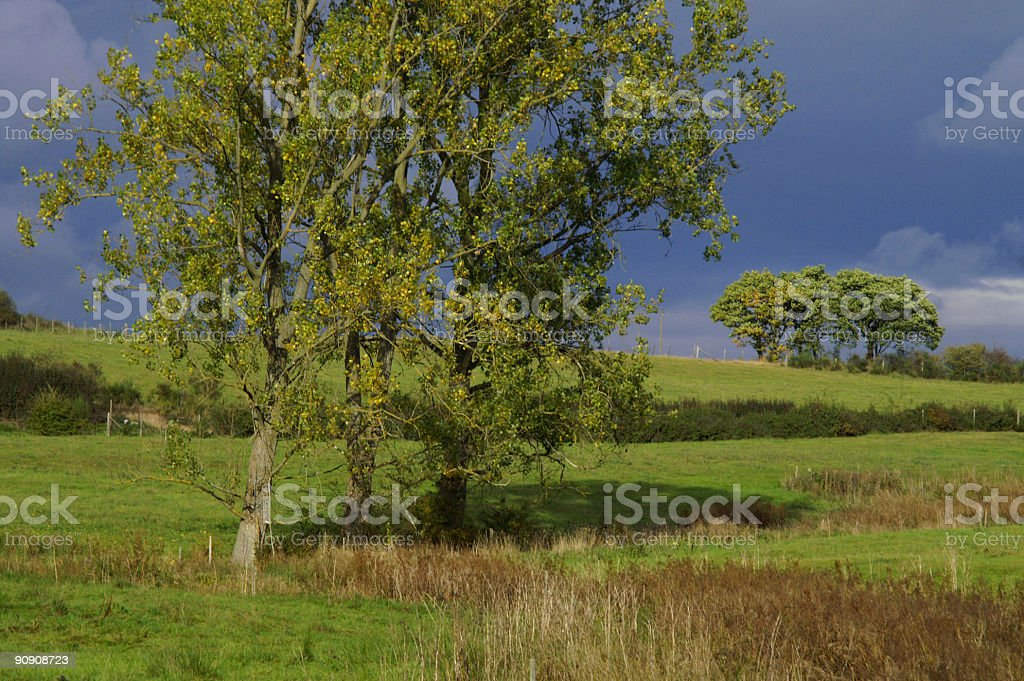 Cluster of trees royalty-free stock photo