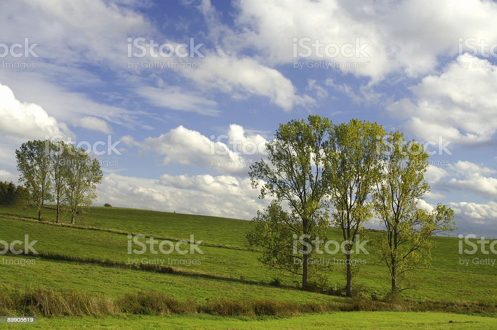 Clusters off trees in autumn royalty-free stock photo