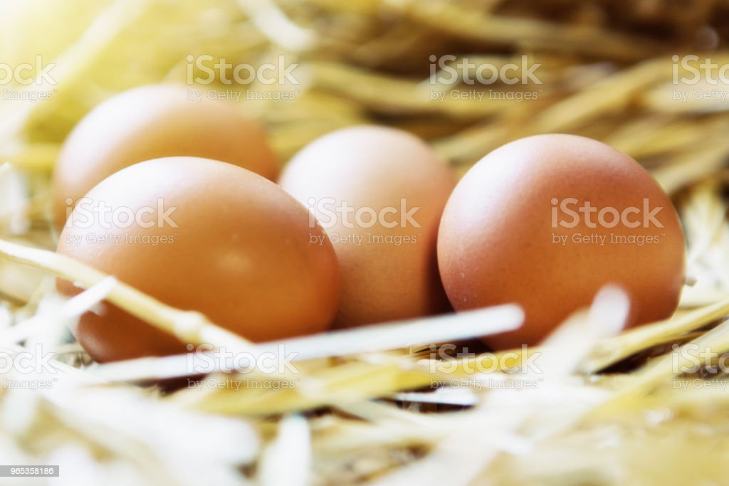 Clutch of chicken eggs in straw nest zbiór zdjęć royalty-free