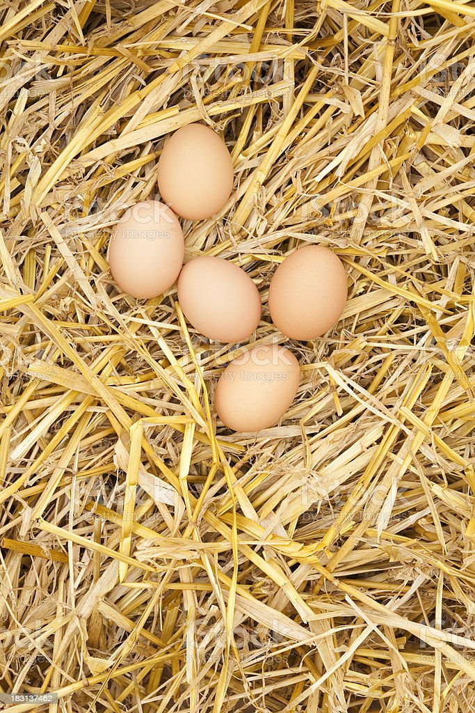 Clutch of eggs in straw royalty-free stock photo
