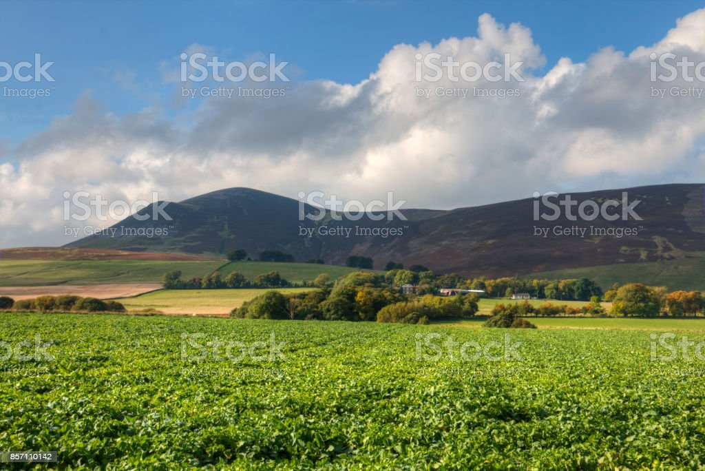 Clyde Valley stock photo