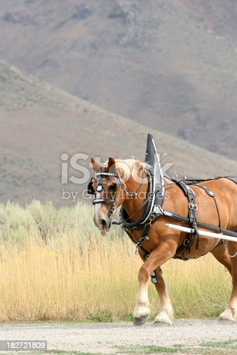 Horse with a harness walking. Copy Space with Nature Setting.