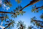 Palm Trees and Clear skies fill the image in Coachella, California. Two airplanes flying past in the distant background. Summertime and the living's easy.