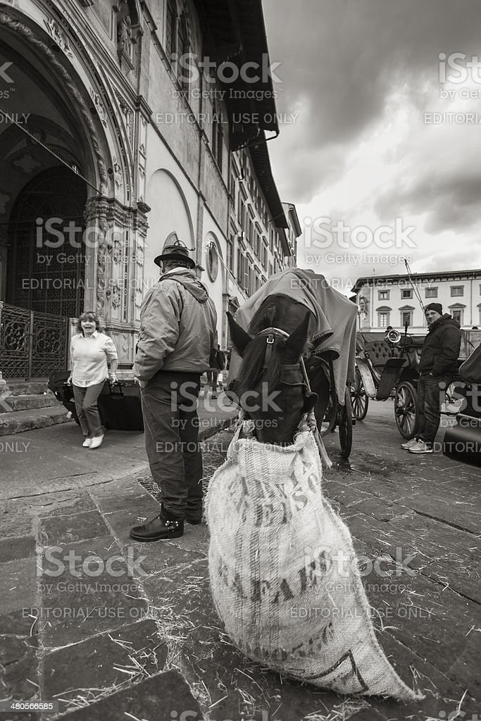 Coachman waiting for passengers next to his horse stock photo