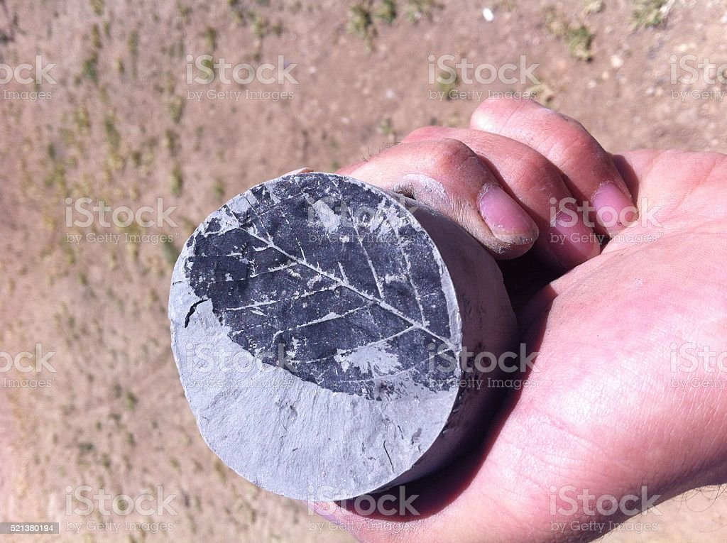 Coal Drilling and Leaf Fossils stock photo