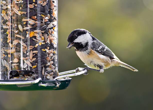 coal meise auf vogel-feeder. - füttern stock-fotos und bilder