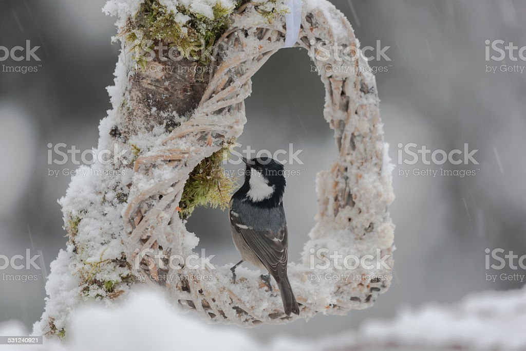 Coal tit on a feeding place stock photo