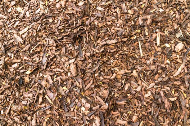 粗幹的松樹樹皮掘金圖像檔