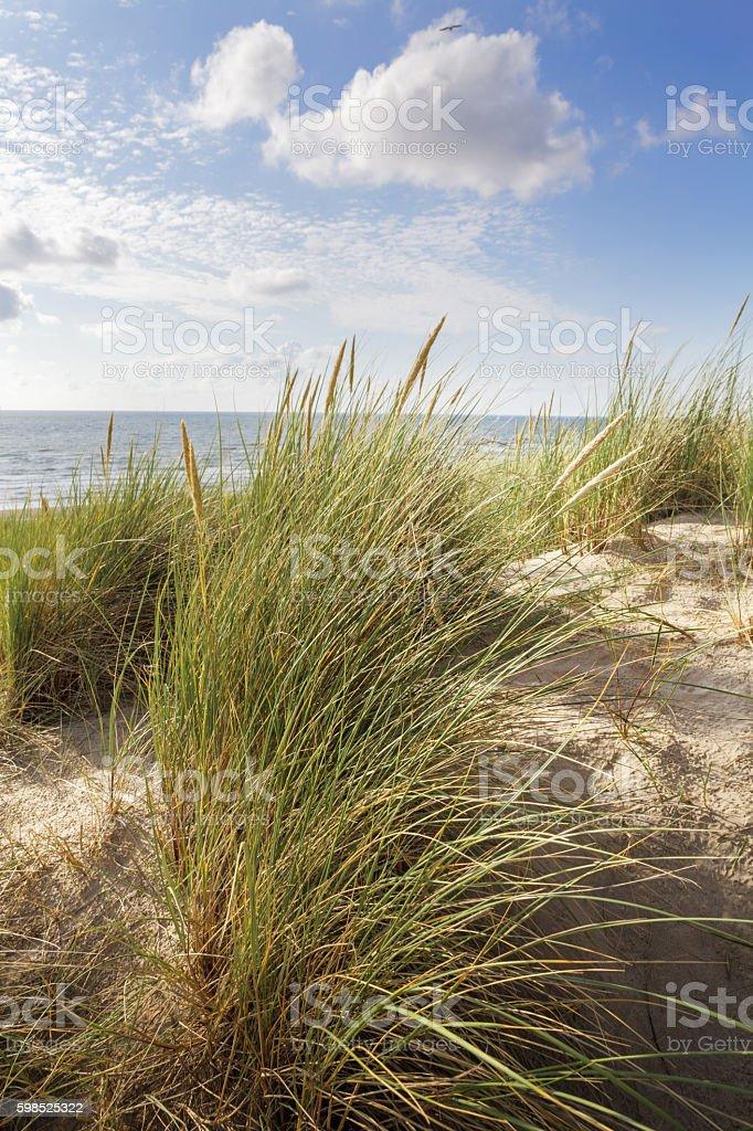 Coast: Dunes stock photo