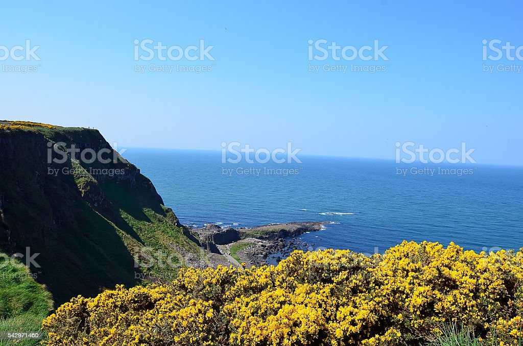 Coast of ireland with sea and cliffs and yellow flowers stock photo coast of ireland with sea and cliffs and yellow flowers royalty free stock photo mightylinksfo Images