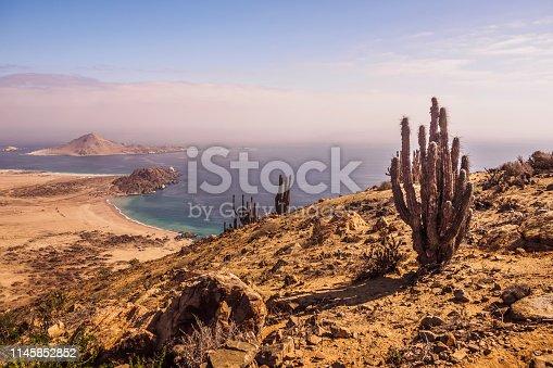 Coast of Pan de Azucar National Park in Chile. Atacama desert coast and cactus. desert landscape