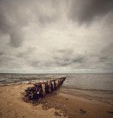 Sea Gull on the Wadden Sea