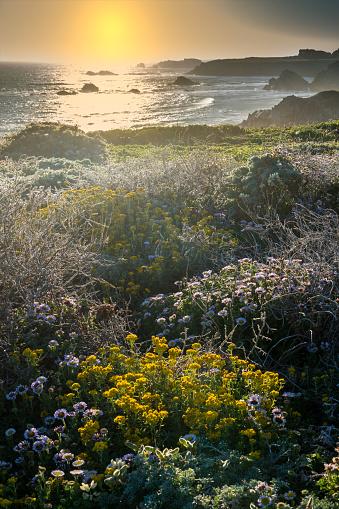 Seascape of northern California