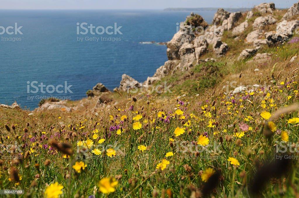 Coastal colour. stock photo