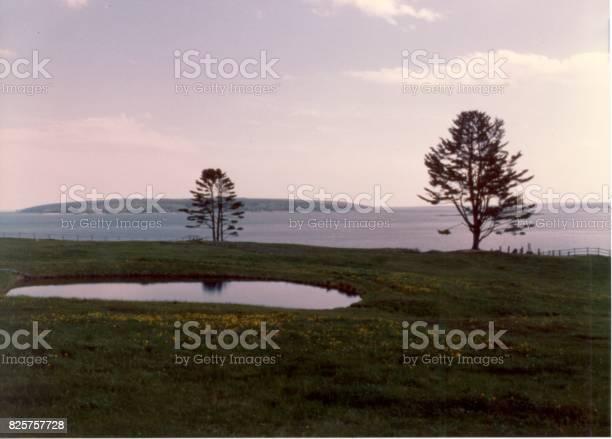 Coastal Field with pond