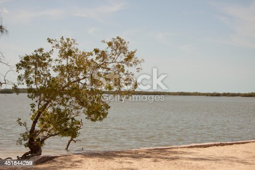 A landscape view from a remote beach on Florida's Gulf Coast looking out from a small beach to the inlet, or bay, to a line of trees on the horizon and the blue sky beyond near Chokoloskee.