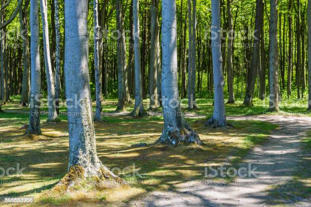 Coastal forest on the Baltic Sea coast in Nienhagen (Germany).