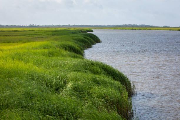 Coastal grass marsh stock photo