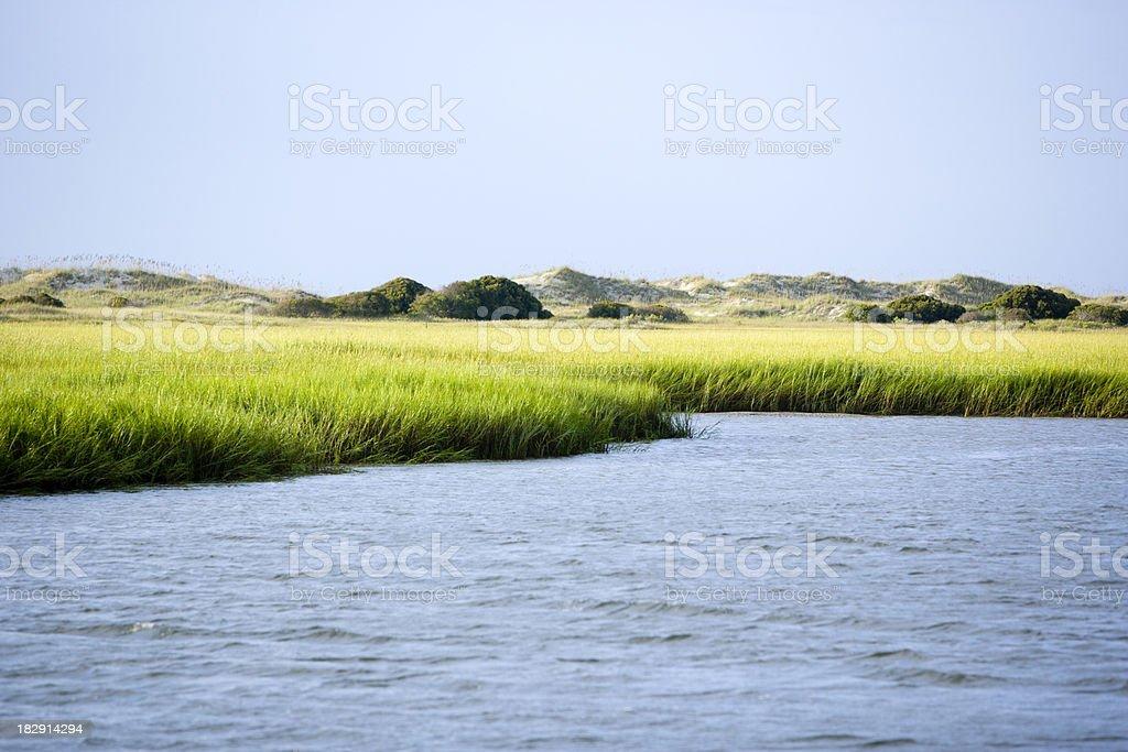 Coastal Green Marsh Grass stock photo