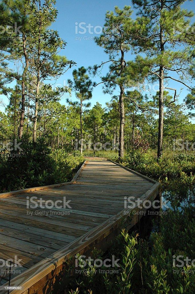 Coastal Hiking Trail royalty-free stock photo